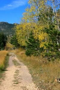 trail_DBBDA09C26422